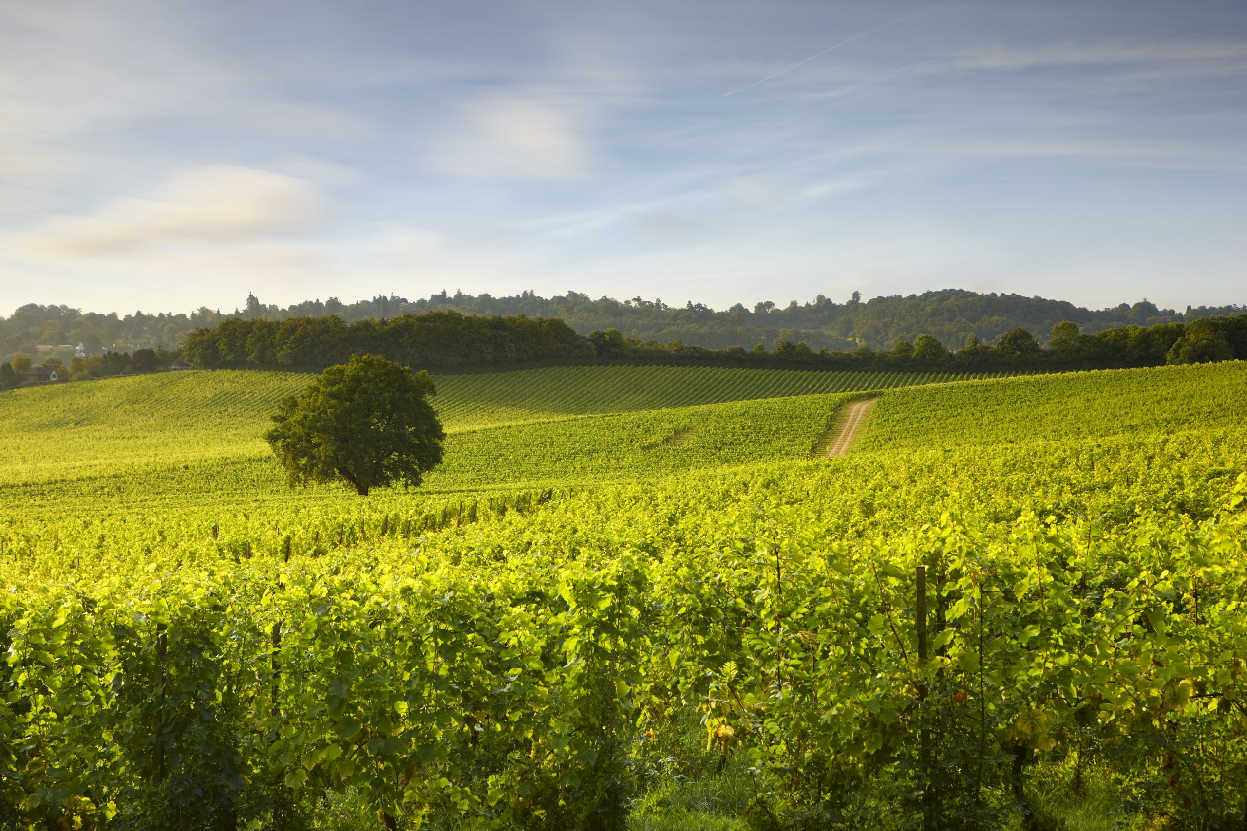 How to find an eco-friendly English wine
