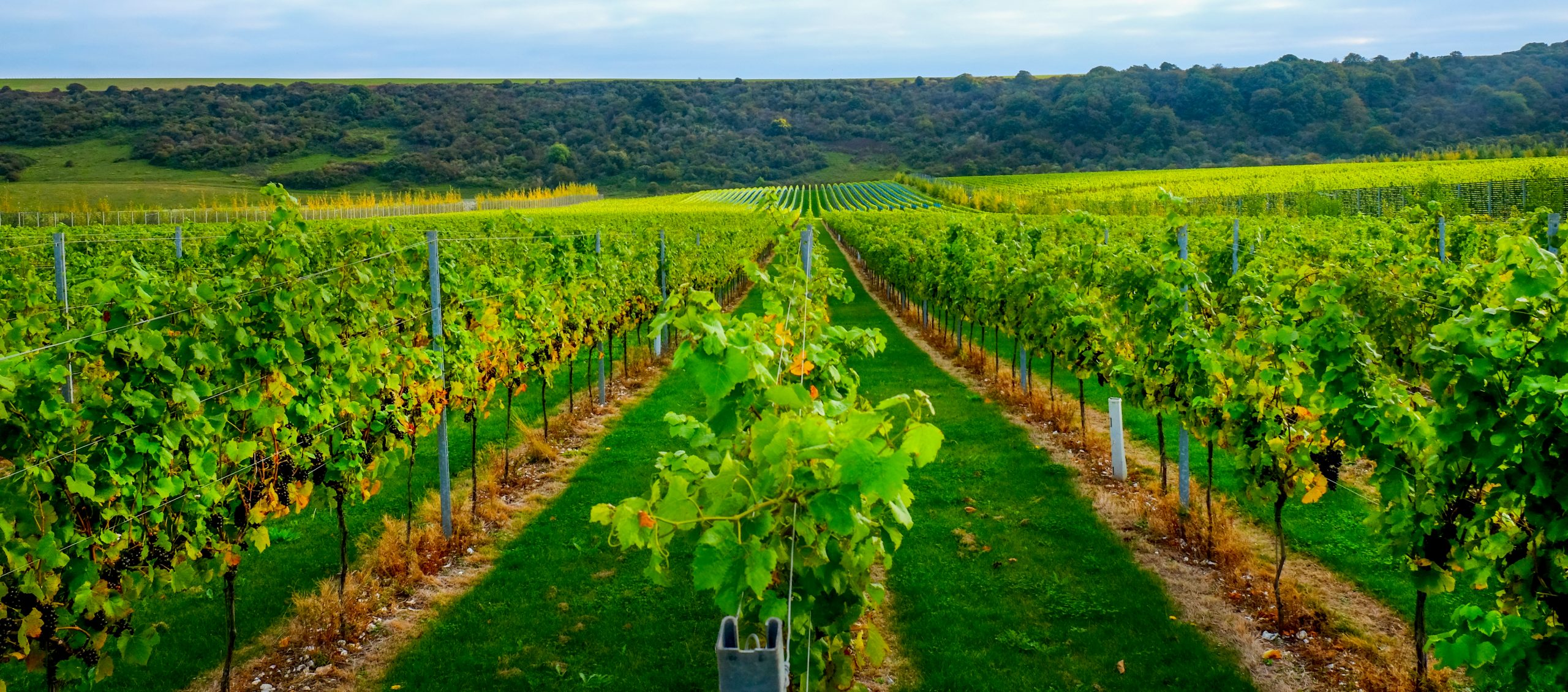 21 vineyards in the South East to visit in 2021