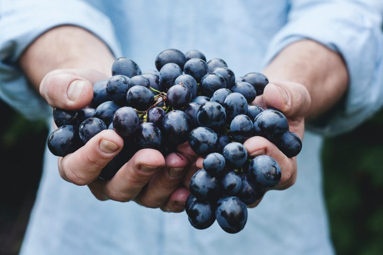 Organic vineyards in Kent, Surrey and Sussex
