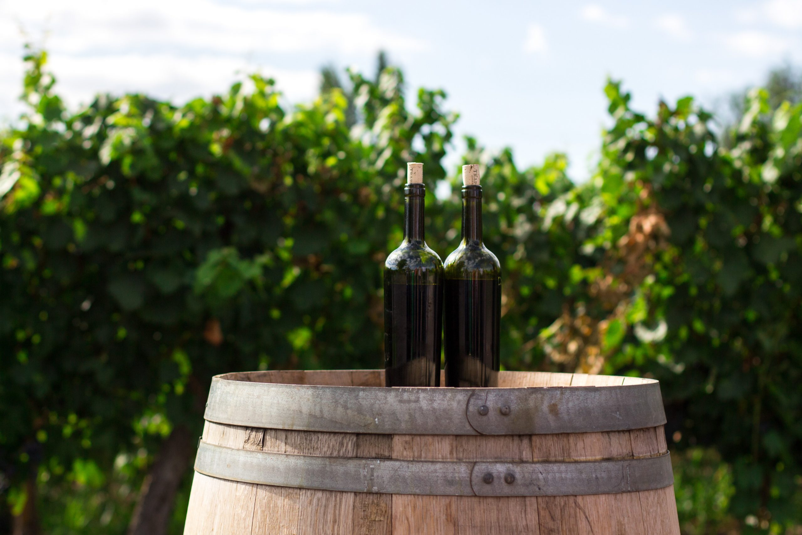 What's on this Bank Holiday weekend: 5  wine-related things to do